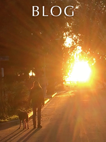 Blog link button. Image: Photo of Laura Meddens and her guide dog Nugget walking on a street towards the sunset.