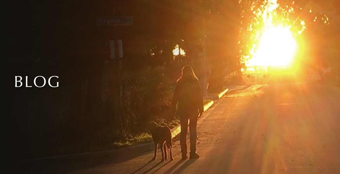 Blog. Image: Photo shows Laura Meddens and her Seeing Eye guide dog Nugget walking on a street towards the sunset.