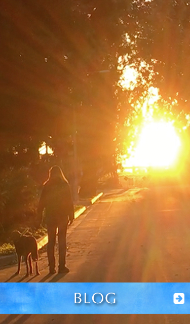 Blog. Image: Laura walks with her Seeing Eye Guide Dog Nugget on a street towards a sunset framed by trees.